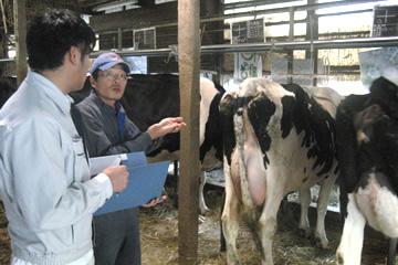 牛舎で酪農家さんの相談にものります